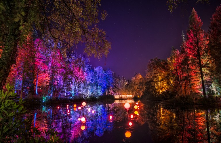 Enchanted Forest-6120-Edit