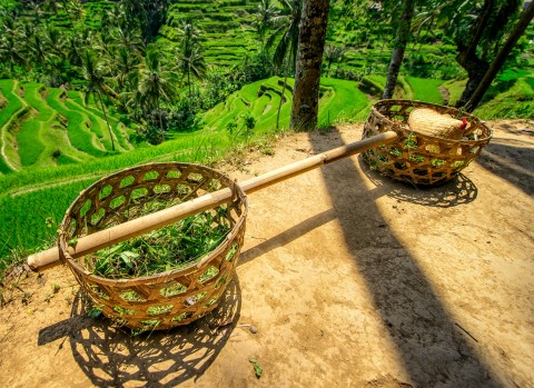 Rice field baskets